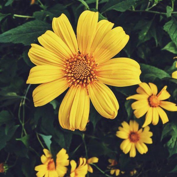 Tên các loài hoa dại đẹp nhất
