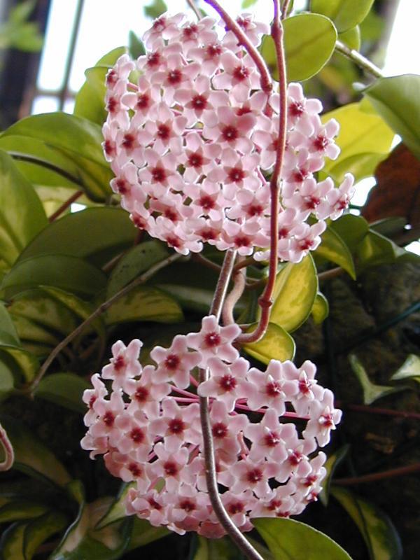 Các loại hoa lan dễ trồng dễ chăm sóc cho người mới