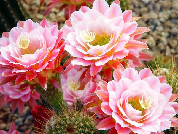 Bật mí loài hoa dành cho cung Nhân Mã