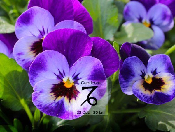 Bật mí loài hoa tương sinh với cung Ma Kết