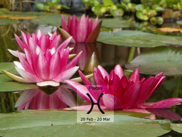 Bật mí loài hoa tương sinh với cung Song Ngư