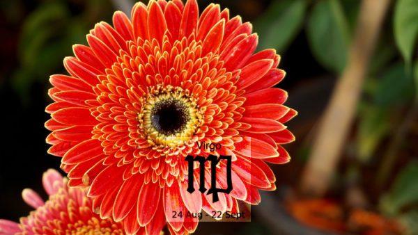Gợi ý loài hoa dành cho cung Xử Nữ ý nghĩa nhất