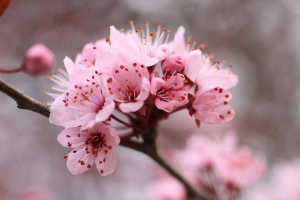 Gợi ý loài hoa tương sinh với cung Kim Ngưu