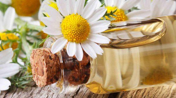 Tác dụng của tinh dầu hoa cúc đối với sức khoẻ và sắc đẹp