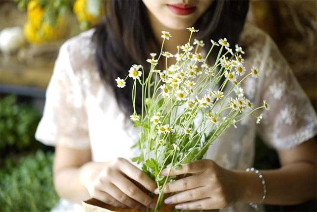 các loài hoa màu trắng nhỏ thơm - hoa cúc tana