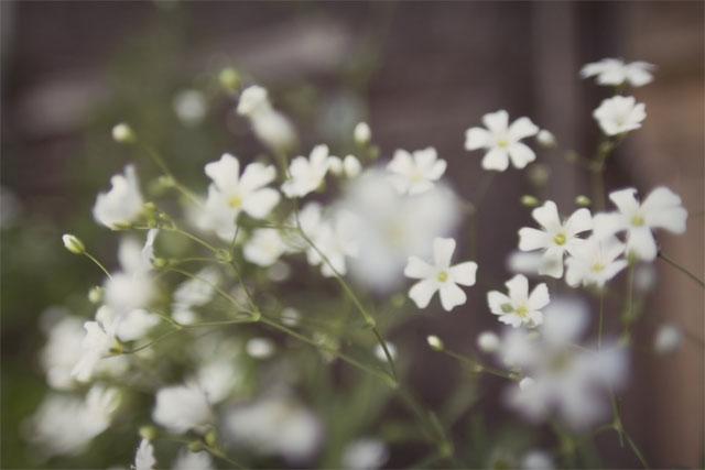 các loài hoa màu trắng nhỏ thơm